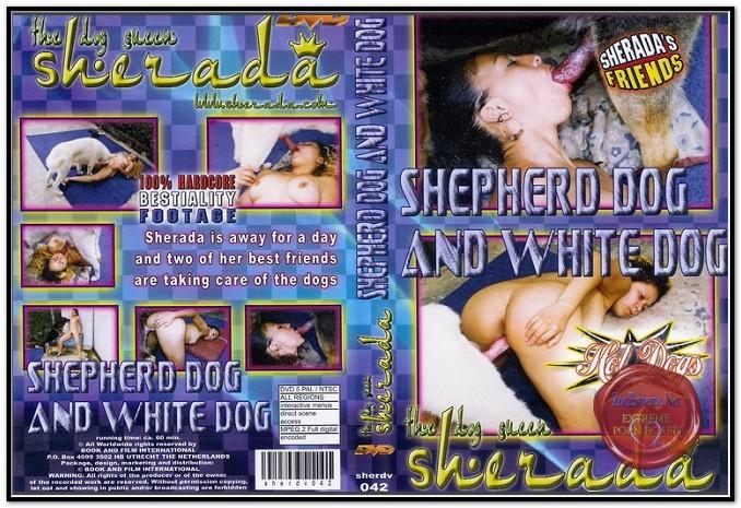 Sherada - SHEPHERD DOG AND WHITE DOG