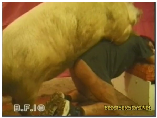 25 - Wild Boar Fucks A Girl - Sex With Pigs