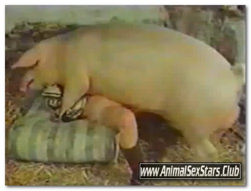 40 - Wild Boar Fucks A Girl - Sex With Pigs